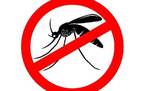 aedes_mosquito